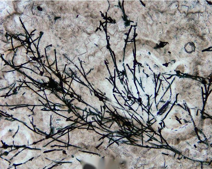 世界最早陆生真菌类化石在我国贵州发现,是蘑菇、酵母的祖先  第4张