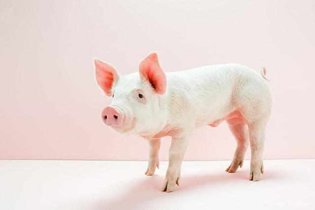 """生肖猪,你的""""贵人""""要来了,千真万确!"""