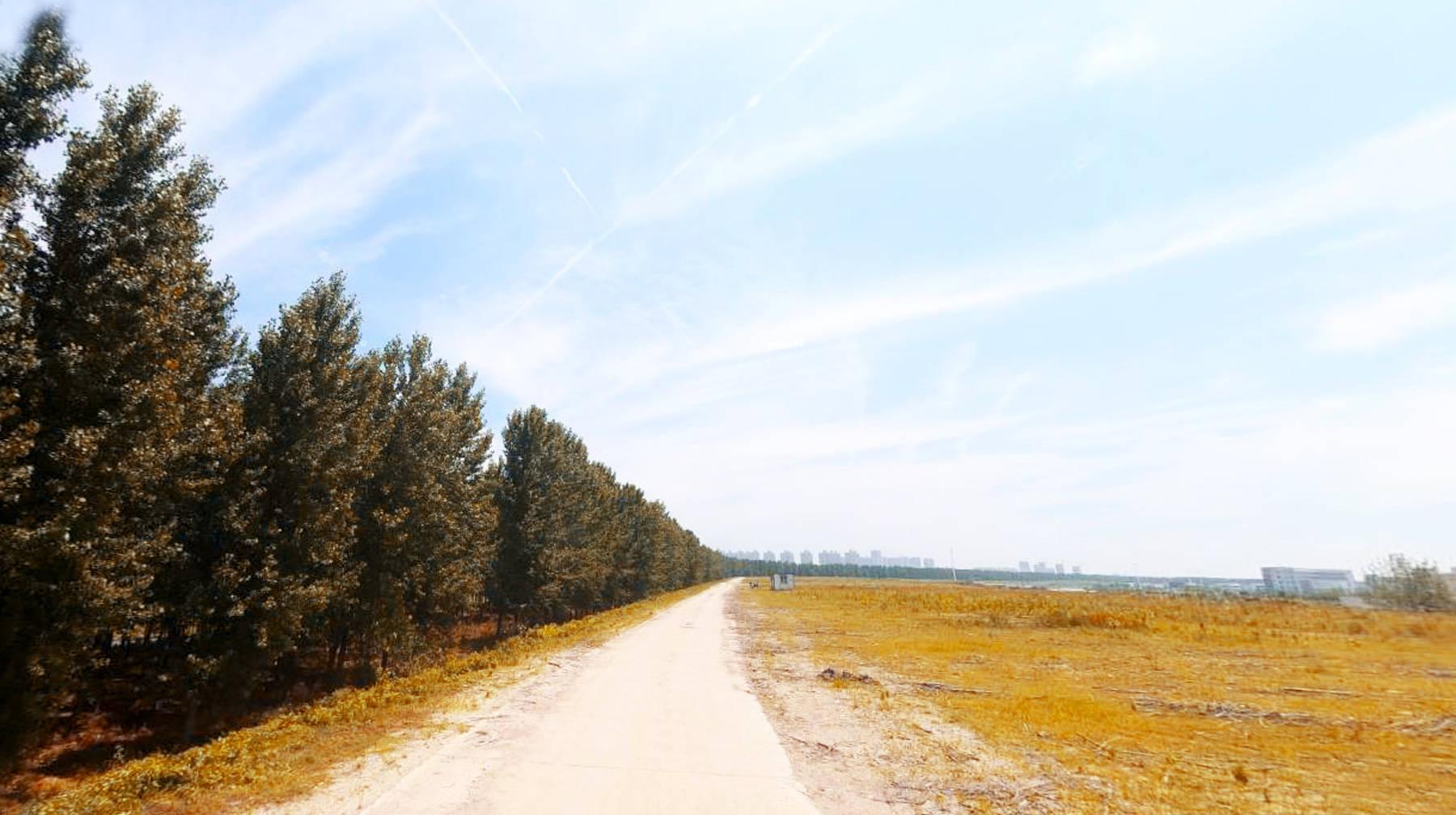 打卡武汉城区东西湖堤:防护林绵延数公里,宽阔湿地成观光好地方