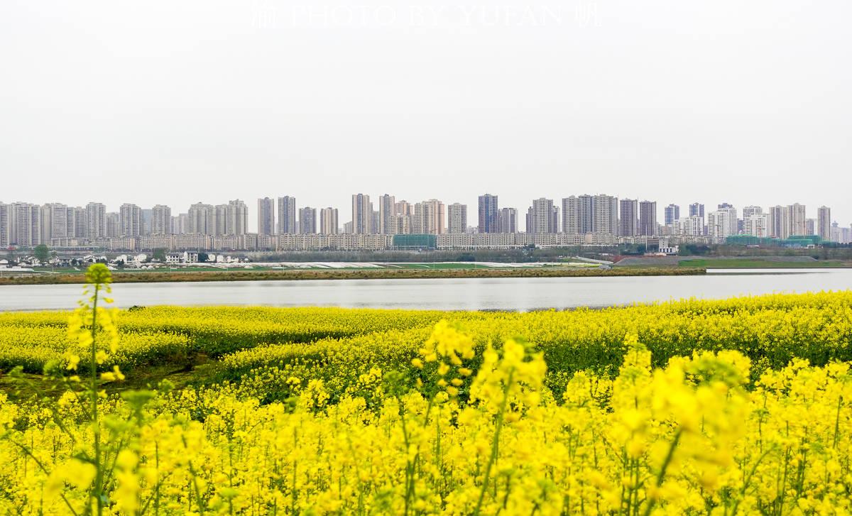 重庆潼南赏花地图:中国最美的城市油菜花海,这才是真正的花园城市