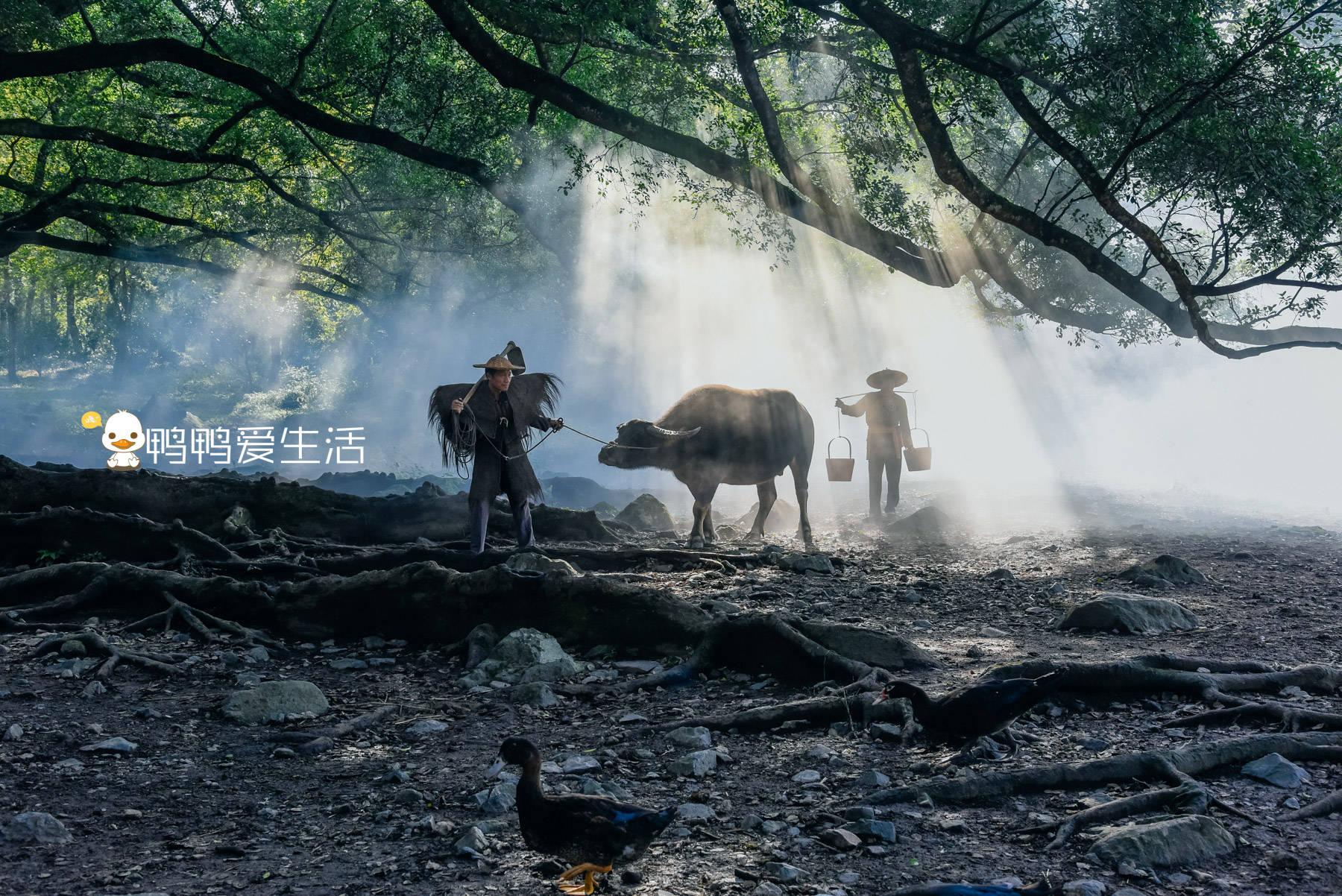 """宁德霞浦""""最经典""""画面,老汉牵牛原来是摆拍,老榕树跟朱熹有关"""