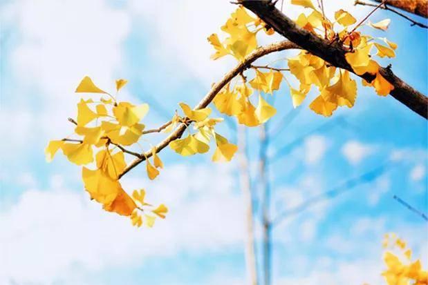 塔罗牌占卜:阳春三月,你的生活感情运势如何?  第4张