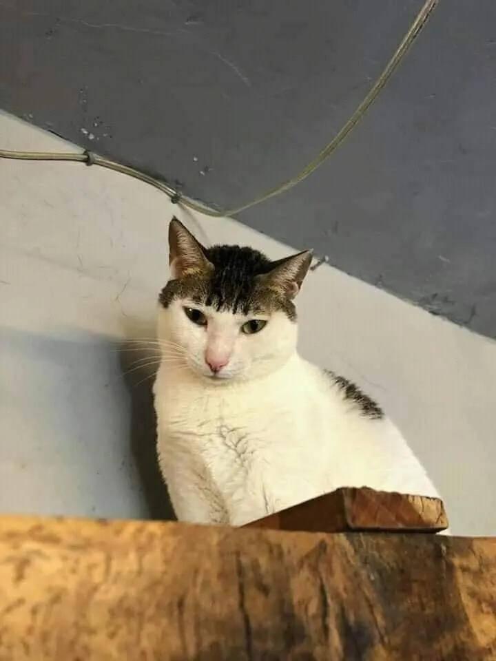 原来小猫咪也可以剪齐刘海,不信你看看…