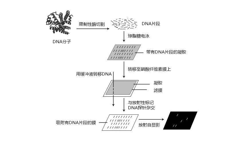 拉菲8平台总代-首页【1.1.0】