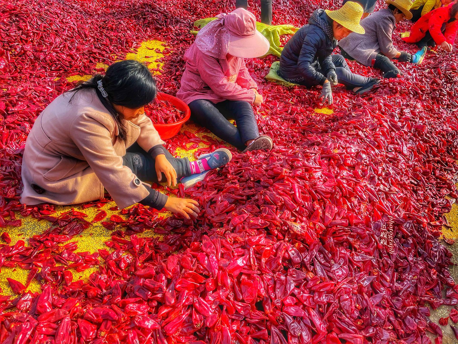 河南淅川自驾游 邂逅辣椒之都 贵州知名油辣椒竟源于这里