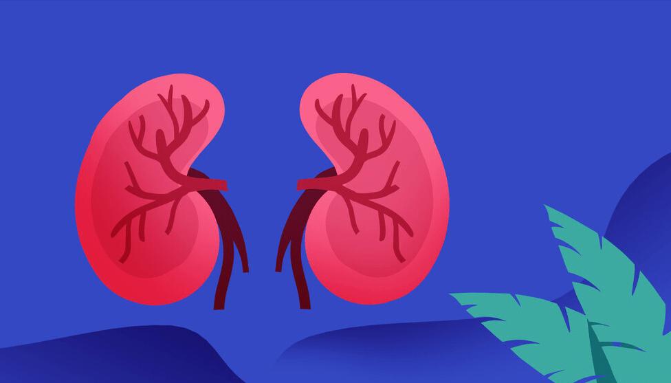 原創             春季將養正當時!如何做才能更好保持腎臟健康?看醫學專家怎么說