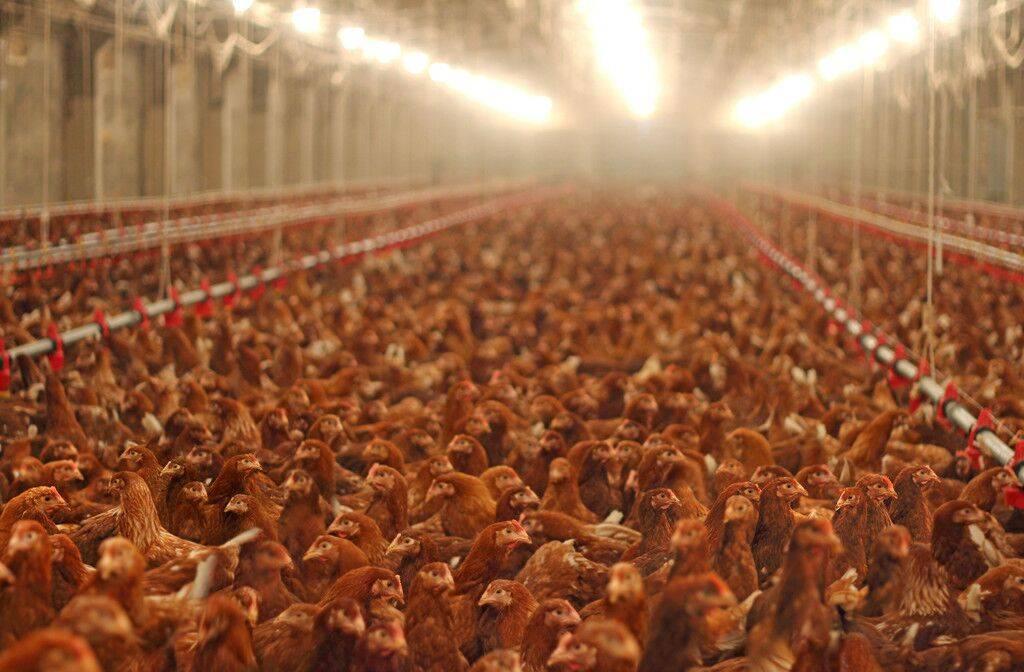我的命是猪的,不是我的!牛羊肉和猪肉价格上涨,只剩下鸡肉