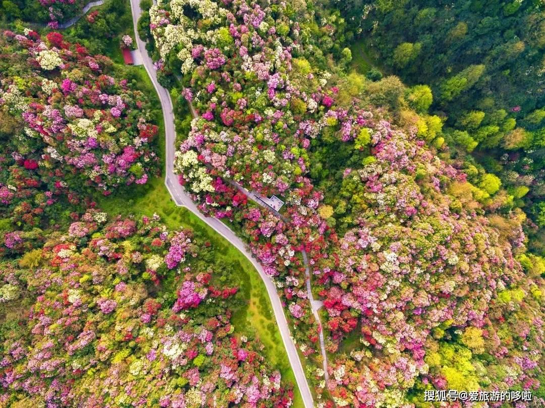 春天来贵州,一起走走花路吧!