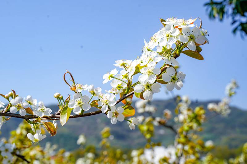 花开正好,遇见鸬鸟【杭州余杭】
