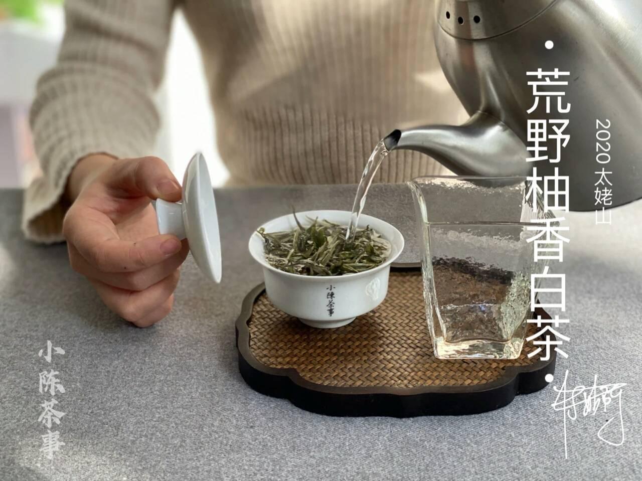 白茶是该喝新茶还是有年份的老茶?喝鲜爽还是枣香蜜韵?答案来了