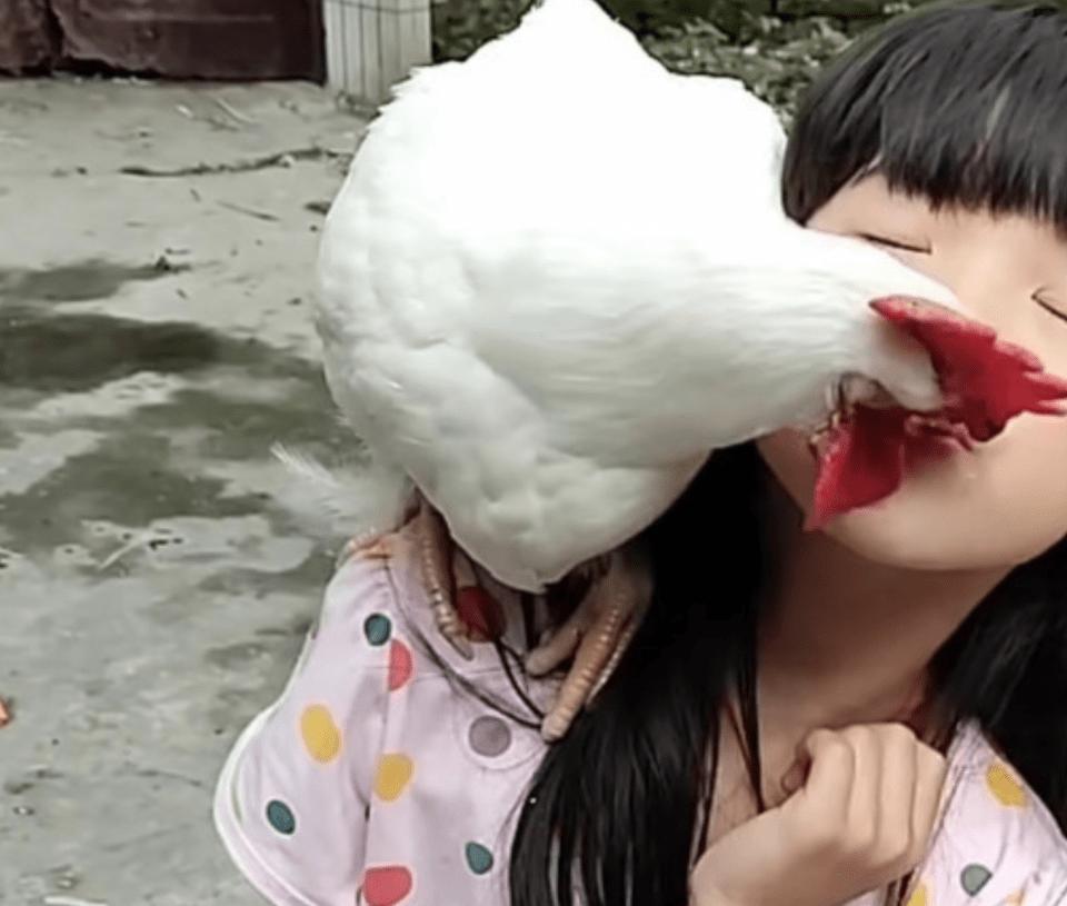 给女儿买了一只宠物鸡,没多久毛就掉光了:难道是中年危机了?