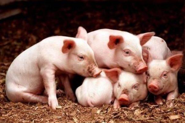 原创             属猪人最全婚配表,找到合适的婚配对象,家庭才能美满幸福!
