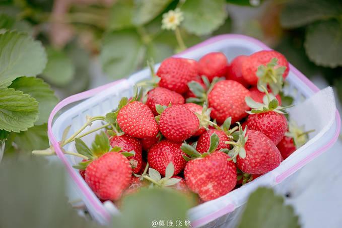 广州周边春日游,附上一份最惬意的度假攻略