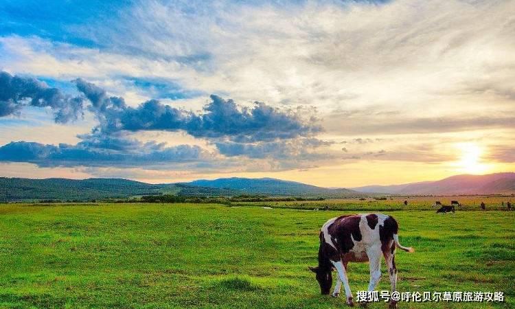 呼伦贝尔大草原旅游有什么好玩的?