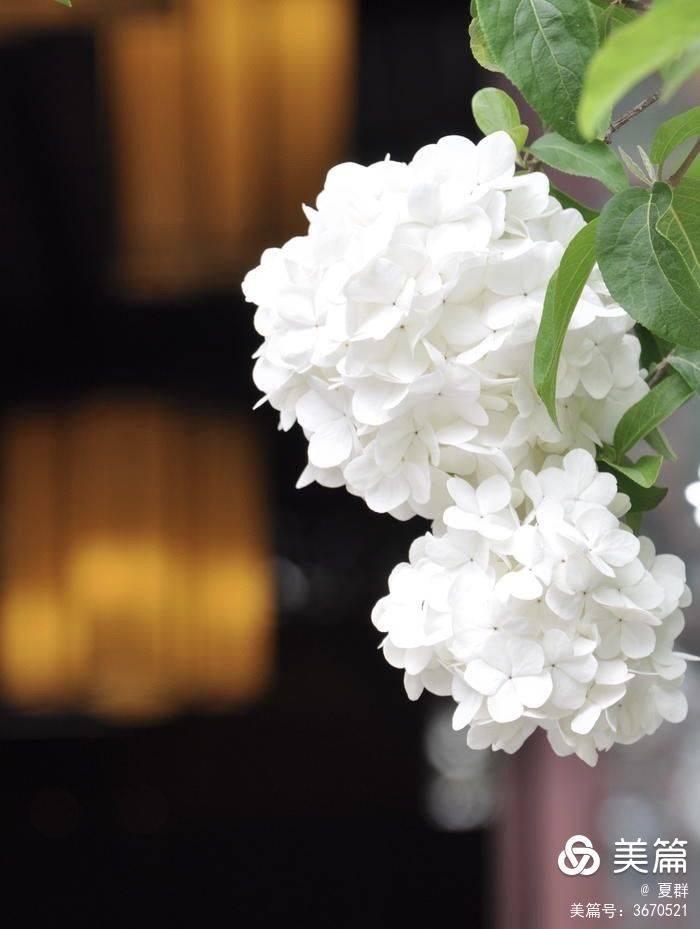 原创             幽幽庭院寂无声,朵朵繁花雪栖春!繁花4月闲逛南京清凉山公园