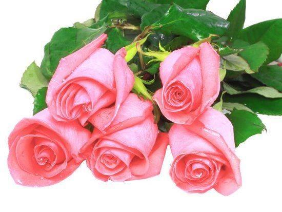 心理测试:选出你最喜欢的玫瑰,测你是越长越漂亮还是越长越丑?