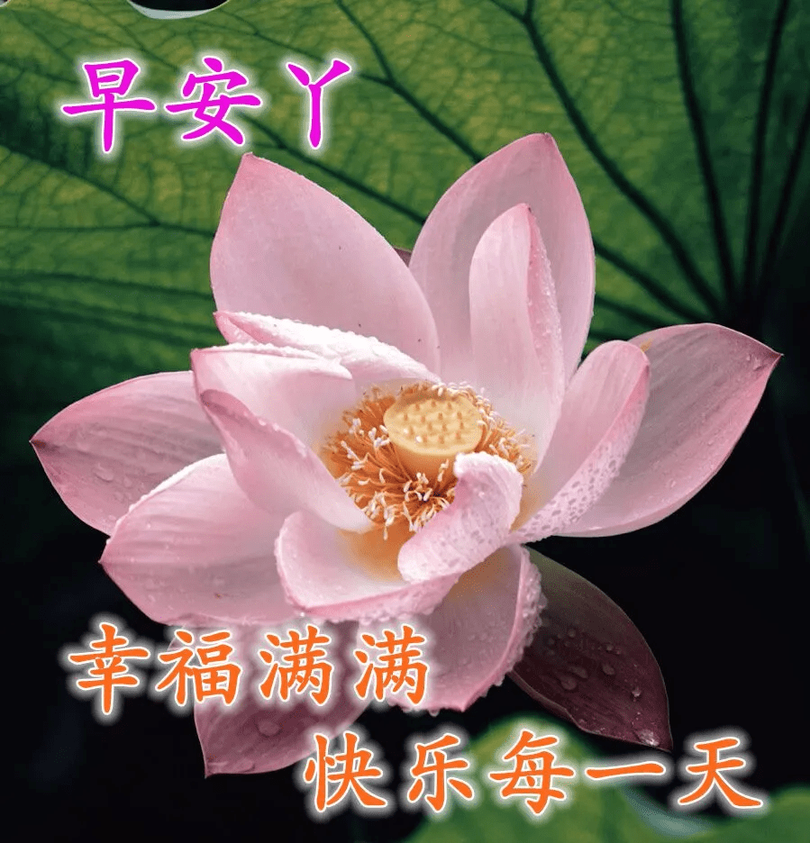 8张最美春日鲜花早上好图片带字带祝福语 特别漂亮的早安免打字问候图片