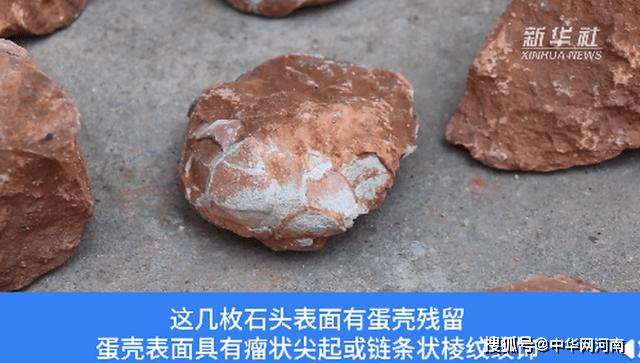 江西工地挖出6600万年前恐龙蛋化石!看这个样子,网友:太像牛肉了