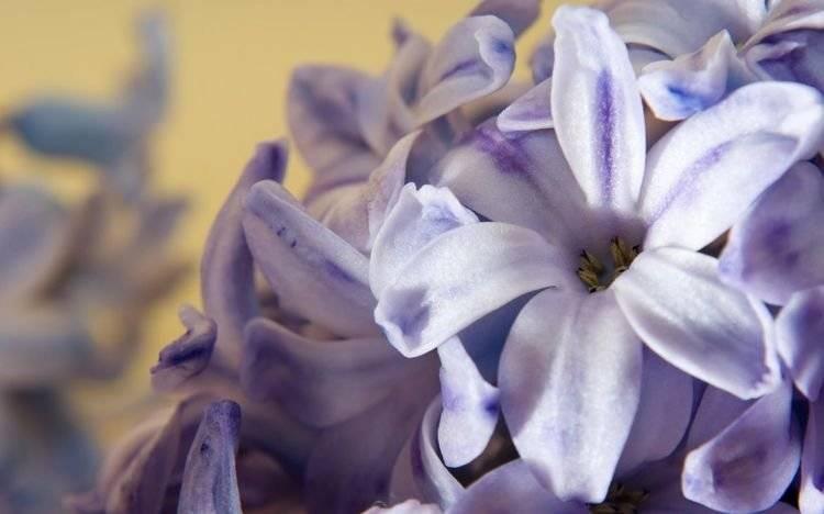 6月份,缘分与桃花红鸾入命,月老提携,收获一份爱情的3大生肖