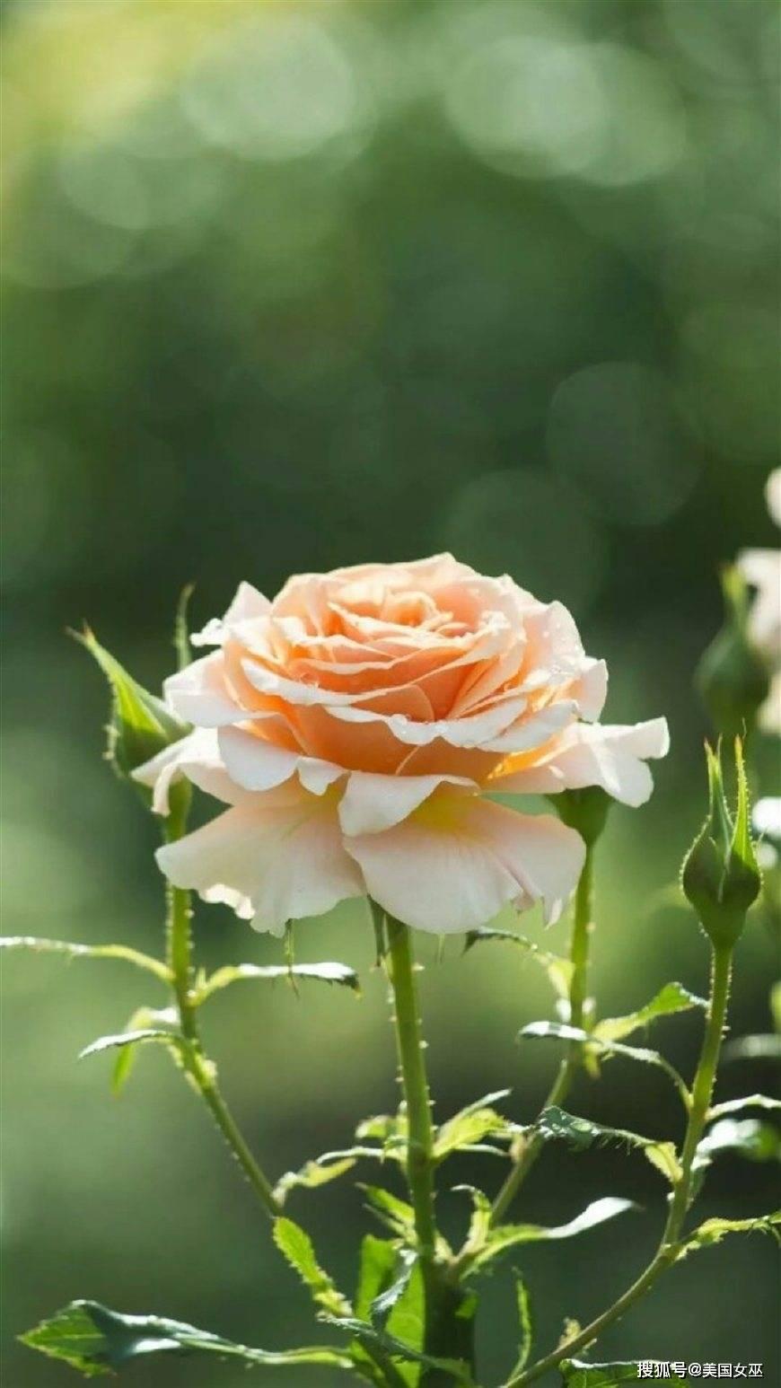 人美心善,才华横溢,招财又旺夫的星座女,最让男人念念不忘