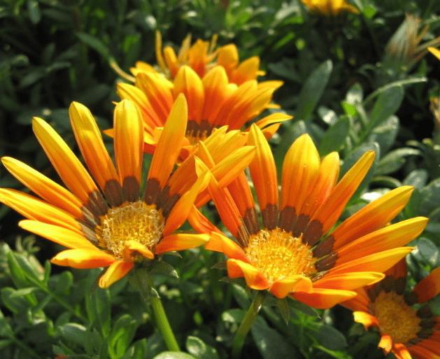 心理测试:四种花,你会选哪种?测出你的贵人何时出现在你身边  第2张