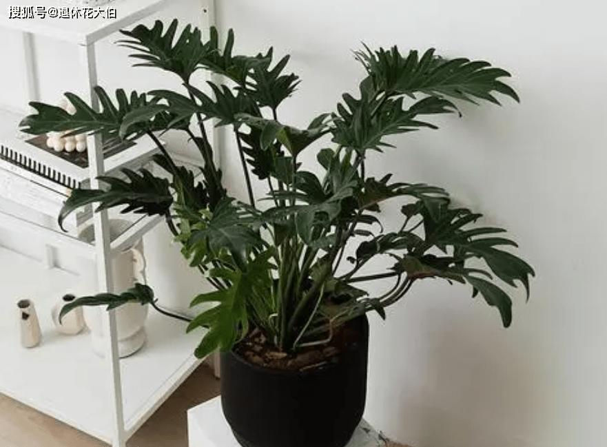 室内盆栽养花,空气太干燥会出问题,该怎么解决?