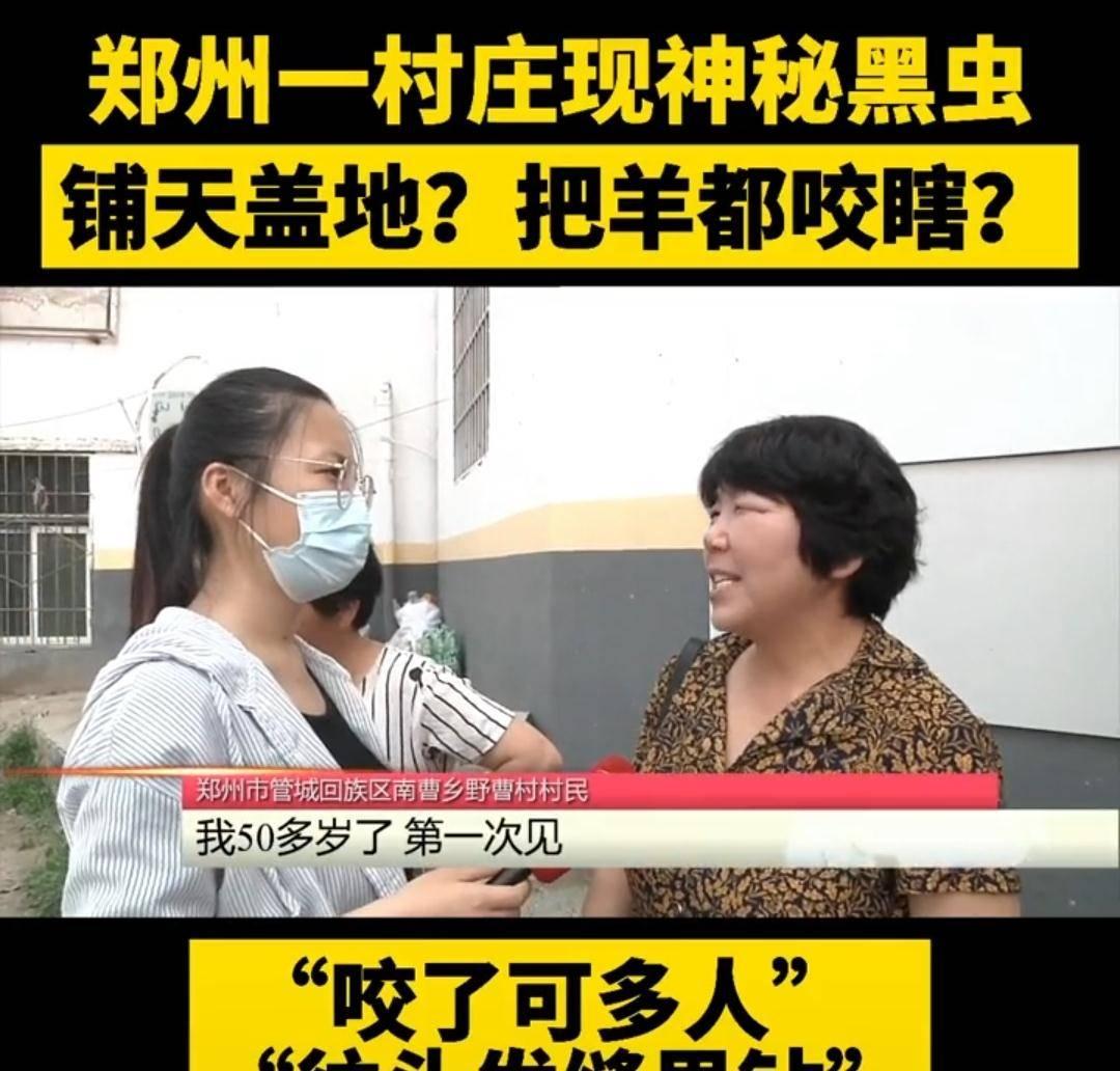 河南郑州:村庄现神秘黑虫,把羊都咬瞎,村民:活了50多年没见过
