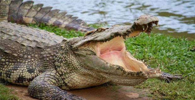 """进化论无法解释,鳄鱼为何是科学家的""""噩梦"""",2亿年没有变化?"""