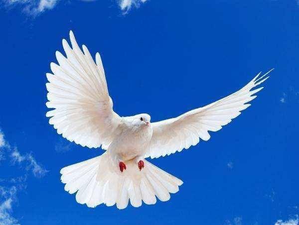 猜一猜 一种善于飞行的鸟 小巧玲珑 品种很多 羽毛颜色多 这是什么鸟 有高智商