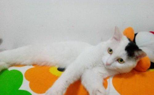 """生活中有貓陪伴更暖心,""""喵喵""""叫聲惹人憐,養了別""""辜負""""它"""