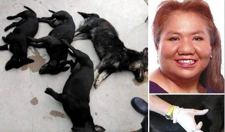 小短腿瘋起來竟然這麼恐怖 美國婦人被鄰居家七隻臘腸犬咬死