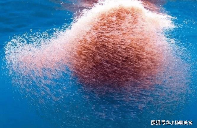 世界上最干净的生物,人和鲸鱼抢着吃,每年要被吃掉2亿吨