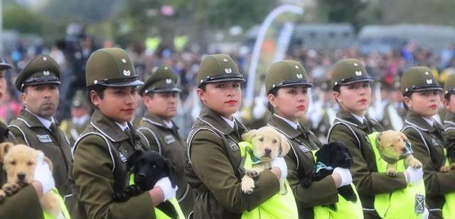 智利阅兵现场, 女兵怀抱小奶狗, 有些还满意的睡着了