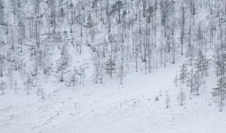 科考队在西伯利亚发现一家族,没多久神秘去世,科考队:怪我们