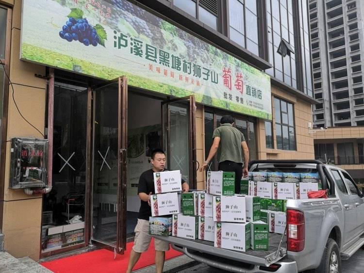 泸溪狮子山葡萄卖完啦!湘西州商务局、退役军人事务局助农活动成效显著