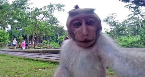 """你听过恐怖的""""食人猴""""吗?即将拥有语言能力,因危及村民被消灭"""
