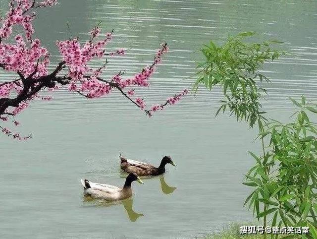 春江水暖鸭先知,太美了!