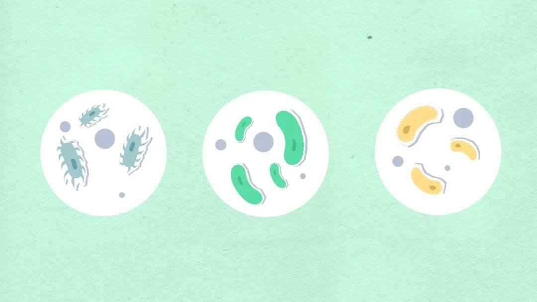 康威龙小课堂|洗衣液和消毒液不宜混合使用!
