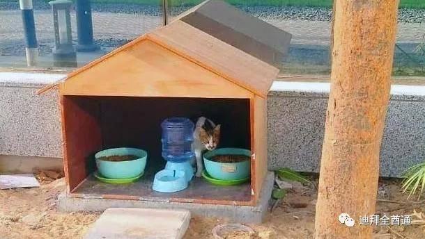 流浪猫在阿布扎比有了自己的喂食站