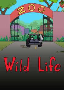 野生动物第一季