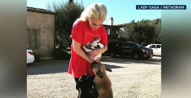 """5人因抢劫Lady Gaga宠物被捕 嫌犯曾""""自投罗网"""""""