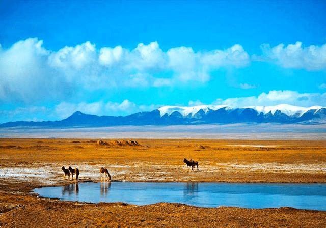 揪心场景!青藏高原可可西里又现巨大垃圾带,紧邻公路臭气熏天