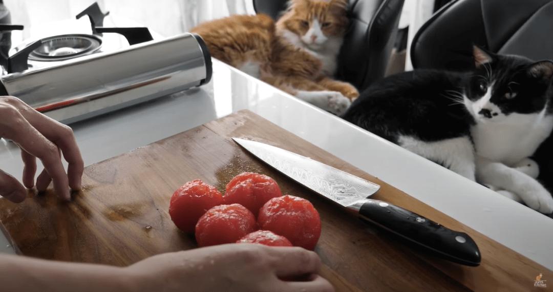 教猫做菜?日本美食博主靠猫爆红吸粉470w!