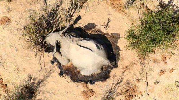 史无前例!博茨瓦纳超360头大象神秘死亡,专家猜测:难道是新冠?