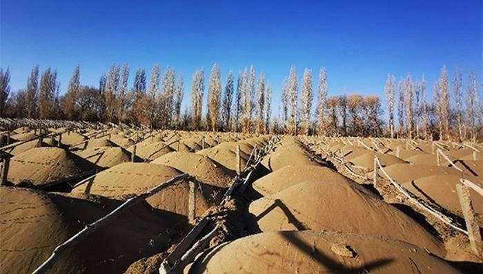 学习小组:敦煌万亩防护林被毁,需要一个明确答案