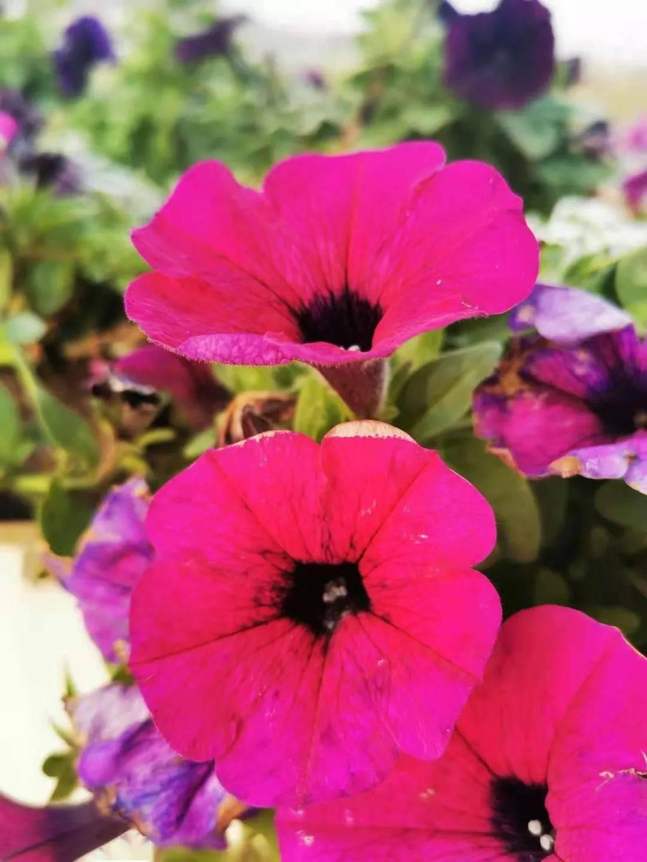 《花的微笑》 在爱的世界里,想你!