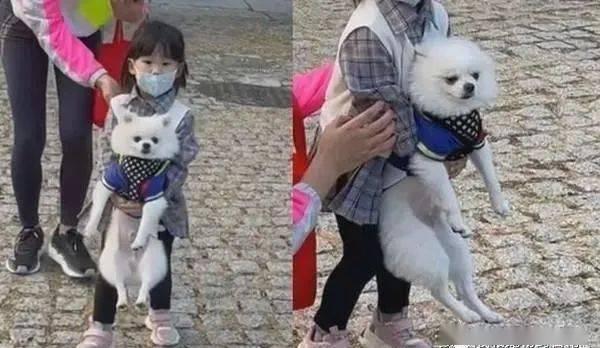 散步遇陌生妹妹半路掳狗,饲主:没看过这么直接的绑架方式!