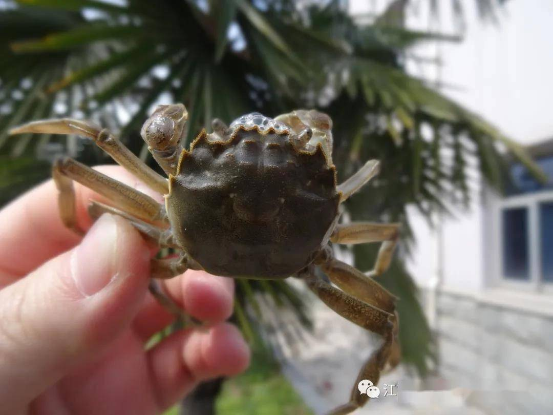 完全控制16河蟹 完全控制天望全本免费