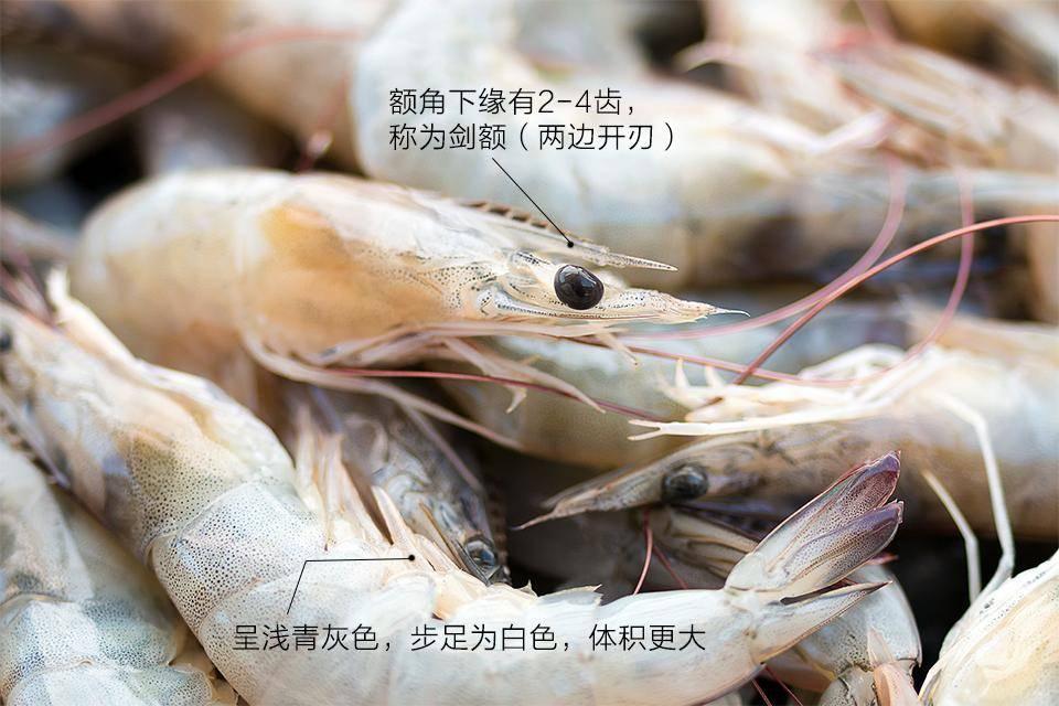 虾线要不要去、海188金宝搏app虾真的比淡水虾好?