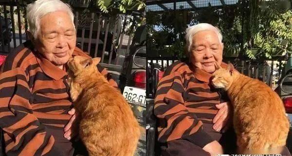 老人与猫一起晒太阳,画面溢出满满的爱!